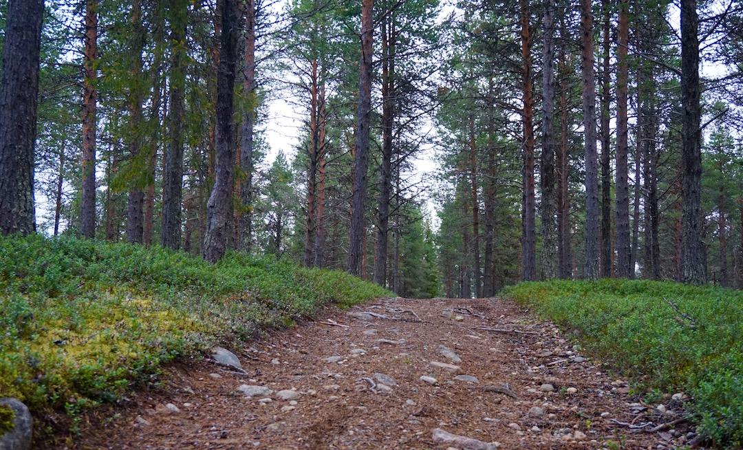 skogspromenad2